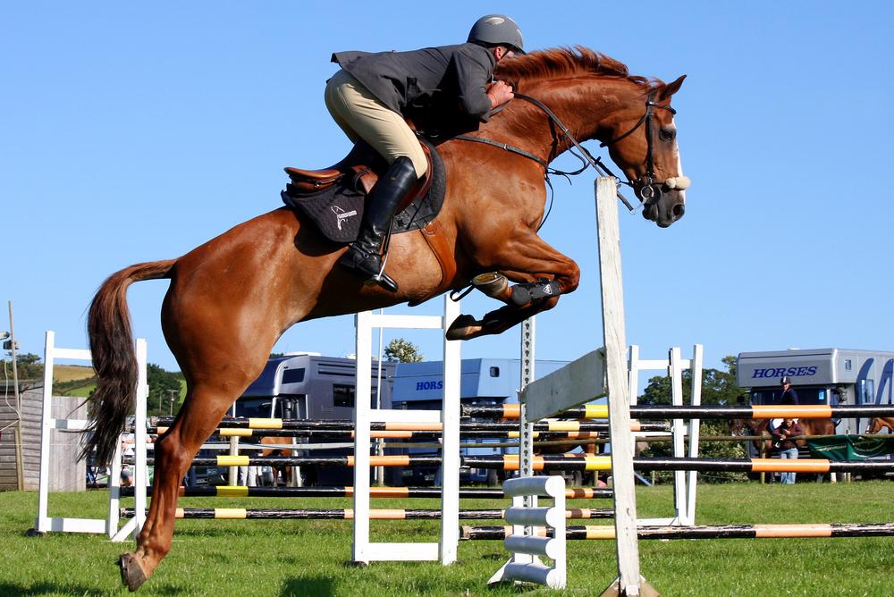 ocala horse show transportation